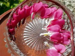The Sun Method of receiving an Energy Signature from flowers. The living flowers floating in a crystal glass bowl of water in sunshine, whilst still attached to the plant.